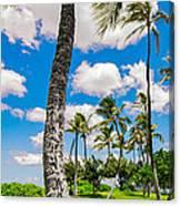 Ko Olina Leaning Palm 3 To 1 Aspect Ratio Canvas Print