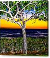 Ko Olina Tree In Sunset Canvas Print