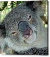 Koala Face Canvas Print