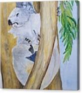 Koala Still Life Canvas Print
