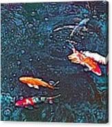 Koi 3 Canvas Print
