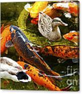 Koi Fish In Pond Swimming With Two Mallard Ducks Canvas Print