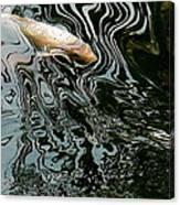 Koi In A Pond Canvas Print