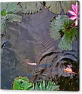 Koi. Lotus. Phu Quoc. Vietnam. Canvas Print
