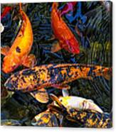 Koi Magic Canvas Print