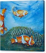 Koi's On The Reef Canvas Print