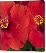 Kokio Ulaula - Tropical Red Hibiscus Canvas Print