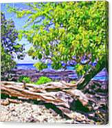 Kona Coast Canvas Print