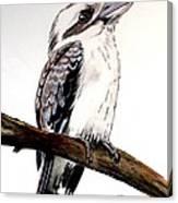 Kookaburra 5 Canvas Print