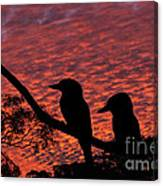Kookaburras At Sunset Canvas Print