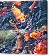 Koy Canvas Print