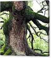Kyoto Temple Tree Canvas Print