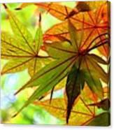 Kyoto's Beauty Of Autumn Canvas Print