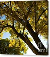 La Boca Ranch Cottonwood Canvas Print