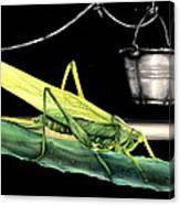 La Locusta E Il Secchio Canvas Print