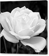 La Rosa In Black And White Canvas Print