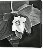 La Vie En Noir Et Blanc Canvas Print