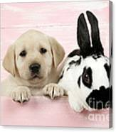 Lab Puppy And Bunny Canvas Print