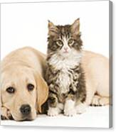 Labrador And Forest Cat Canvas Print