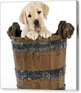 Labrador Puppy In Bucket Canvas Print