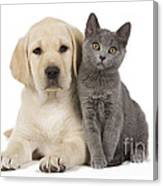 Labrador Puppy With Chartreux Kitten Canvas Print