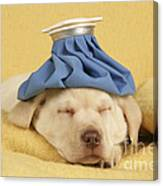 Labrador Puppy With Ice Pack Canvas Print