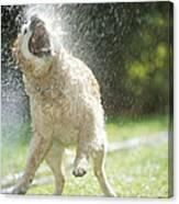 Labrador Retriever And Hose Canvas Print