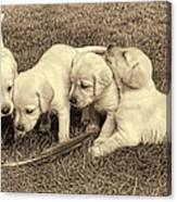 Labrador Retriever Puppies And Feather Vintage Canvas Print