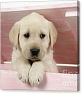 Labrador Retriever Puppy Canvas Print