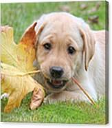 Labrador Retriever Puppy With Autumn Leaf Canvas Print