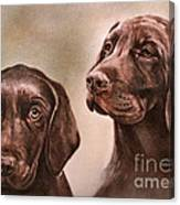 Labrador Retrievers Canvas Print