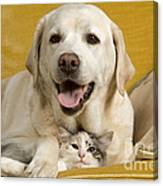Labrador With Cat Canvas Print
