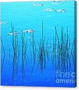 Lacassine Pool Reeds Canvas Print