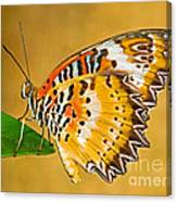 Lacewing Butterfly Cethosia Sp Canvas Print