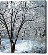 Lacy Snowfall Canvas Print
