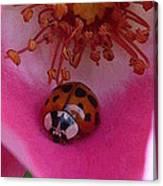 Ladies Rose Canvas Print