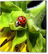 Ladybug And Sunflower Canvas Print