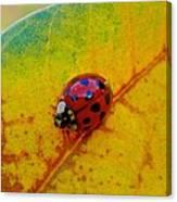 Lady Bug 3 Canvas Print