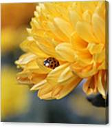 Lady Bug Canvas Print