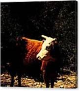 Lady Cow Canvas Print