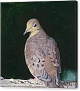 Lady Dove Canvas Print