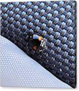 Lady Ladybug And Artificial Surfaces Canvas Print