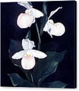 Lady Slipper Canvas Print