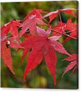 Ladybird With Autumn Leaves Canvas Print