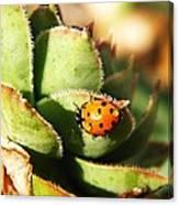 Ladybug And Chick Canvas Print