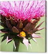 Ladybug And Thistle Canvas Print
