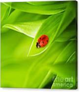 Ladybug On Leaves Canvas Print