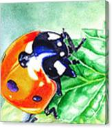 Ladybug On The Leaf Canvas Print