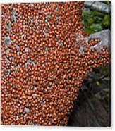 Ladybug Tree Canvas Print