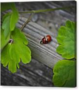 Ladybugs Mating Canvas Print